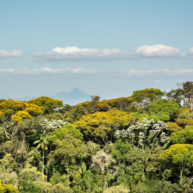 """Fragment of the Brazilian Atlantic Forest from Minas Gerais."" stock image"