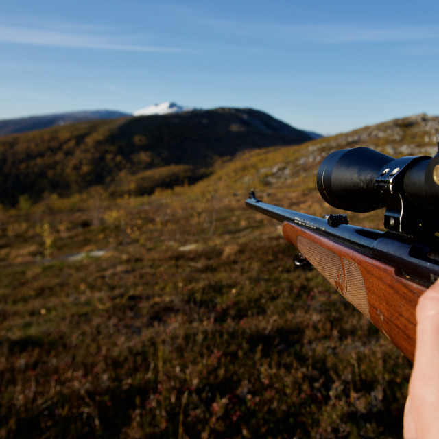 """Gun in moose hunt"" stock image"