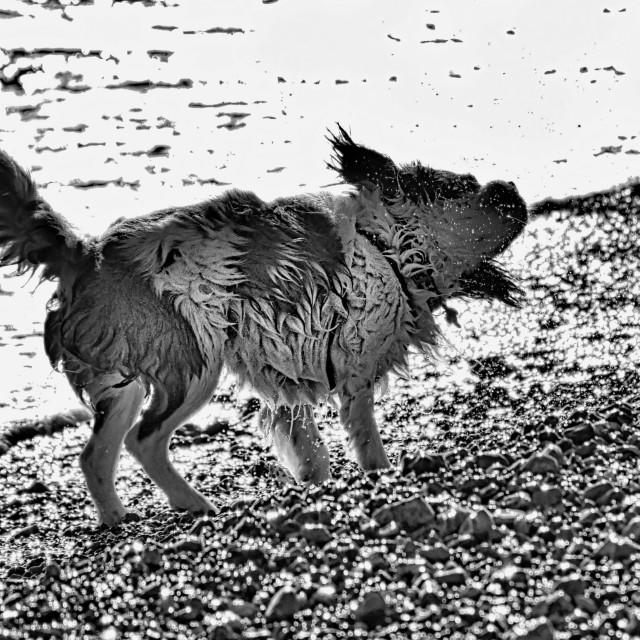 """""""Wet dog"""" stock image"""