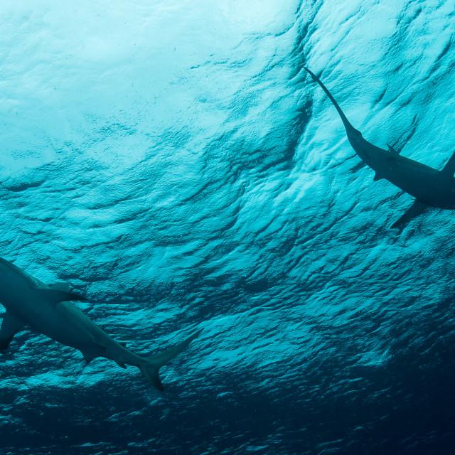 """""""Tubarões"""" stock image"""
