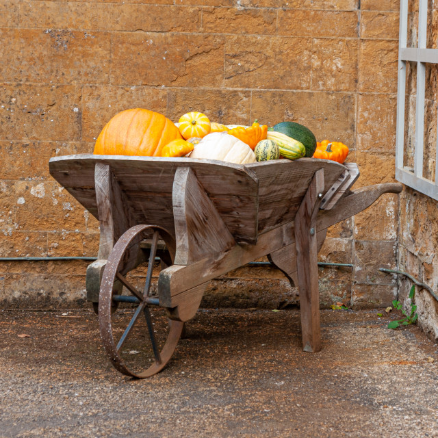 """Pumpkins and squashes in wooden barrow"" stock image"