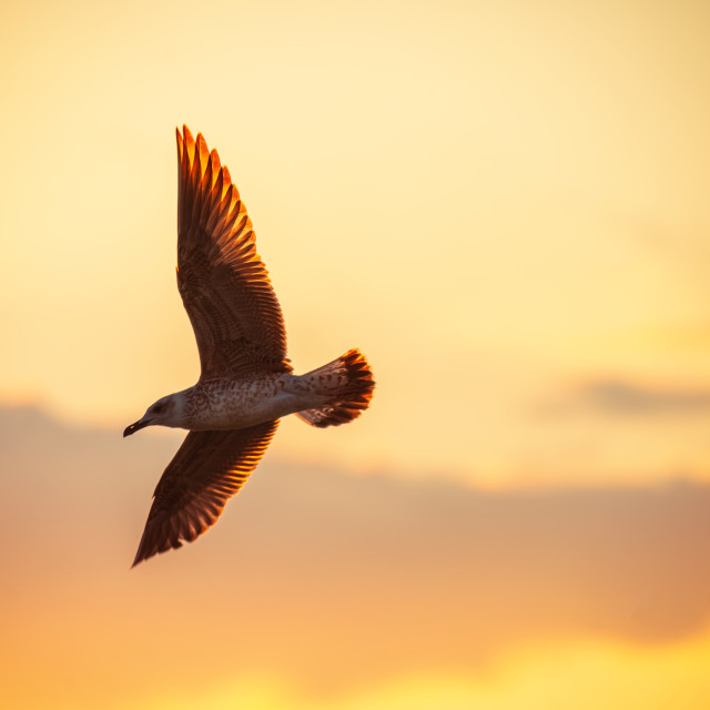 """""""Flying seagulls over the sea"""" stock image"""