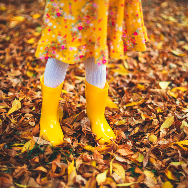 """""""Yellow boots of little girl and fallen colorful leaves in autumn"""" stock image"""
