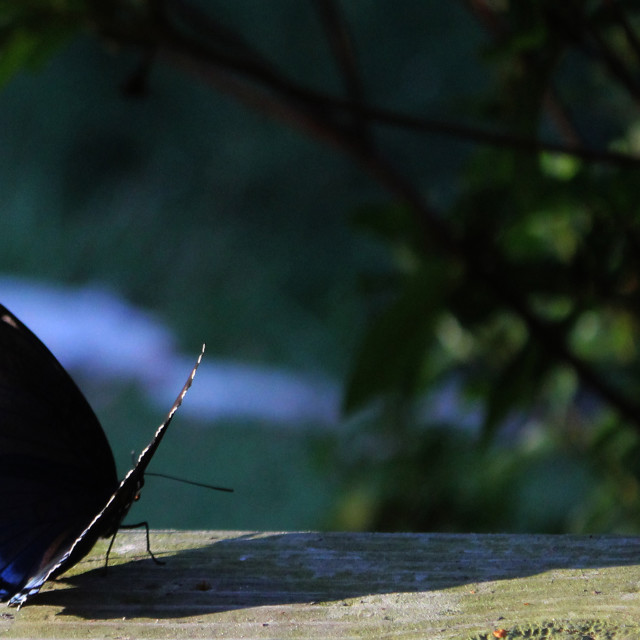 """little butterfly long shadow"" stock image"