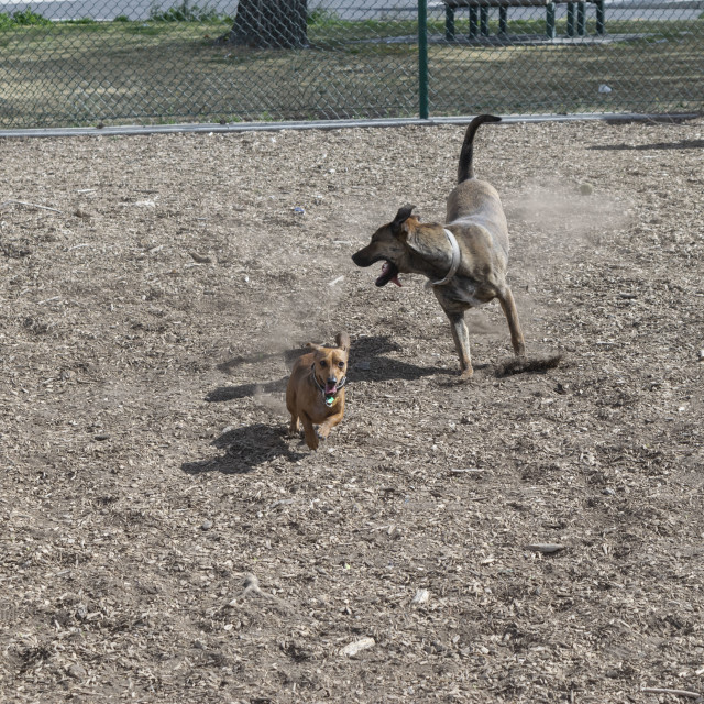 """Albuquerque, New Mexico Dog Park 2016"" stock image"