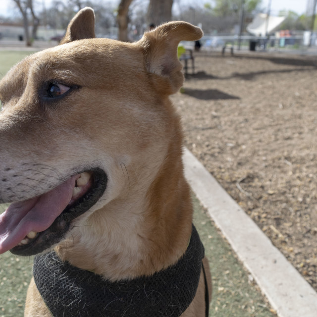 """Albuquerque, New Mexico, Dog ParK, 2016"" stock image"