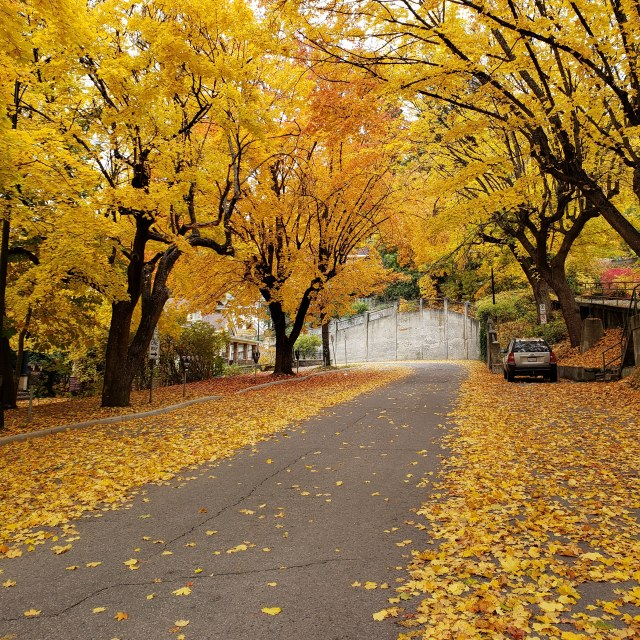 """""""Autumn leaves on a country road with a stone wall"""" stock image"""