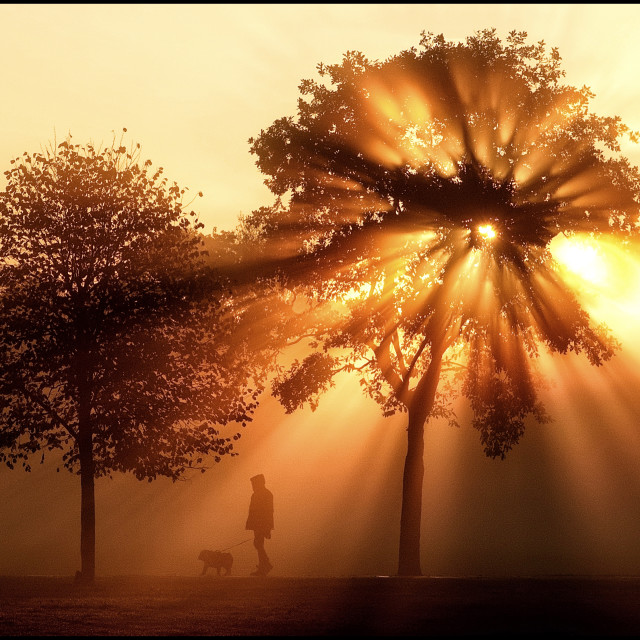 """The morning sun bursts through Autumn leaves"" stock image"