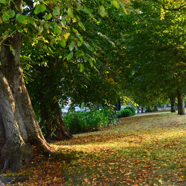 """Autumn Colours Treelined Avenue"" stock image"