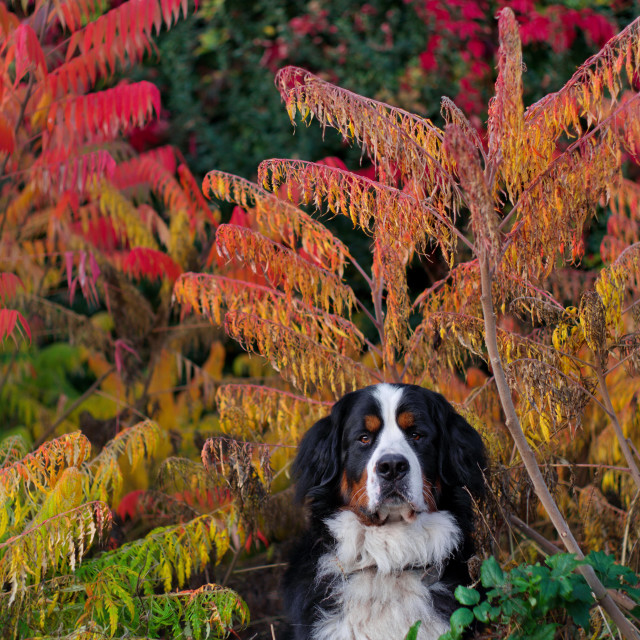 """Autumn colours"" stock image"