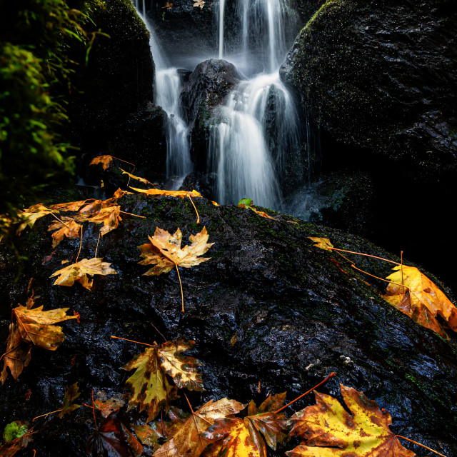 """A Small Waterfall in Autumn with Maple Leaves"" stock image"