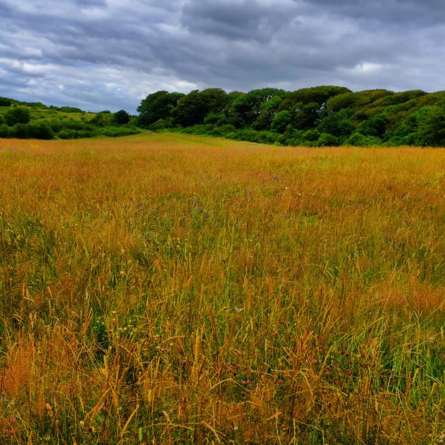 """""""Autumn Fields"""" stock image"""