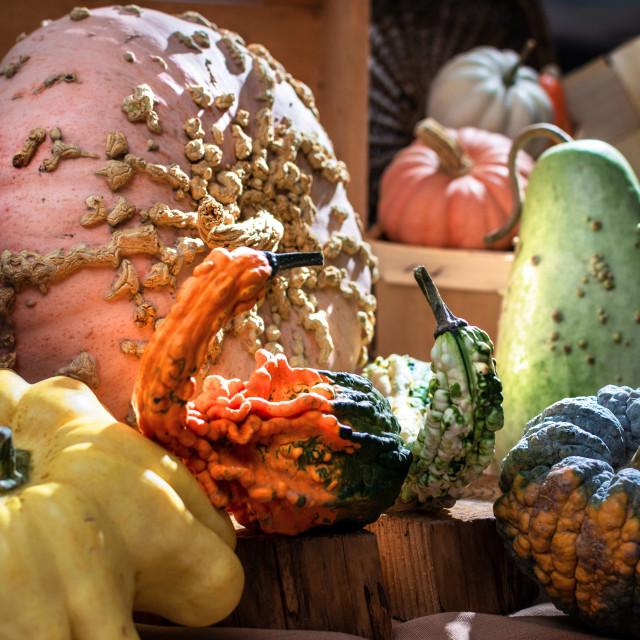 """""""pumpkin stilllife"""" stock image"""