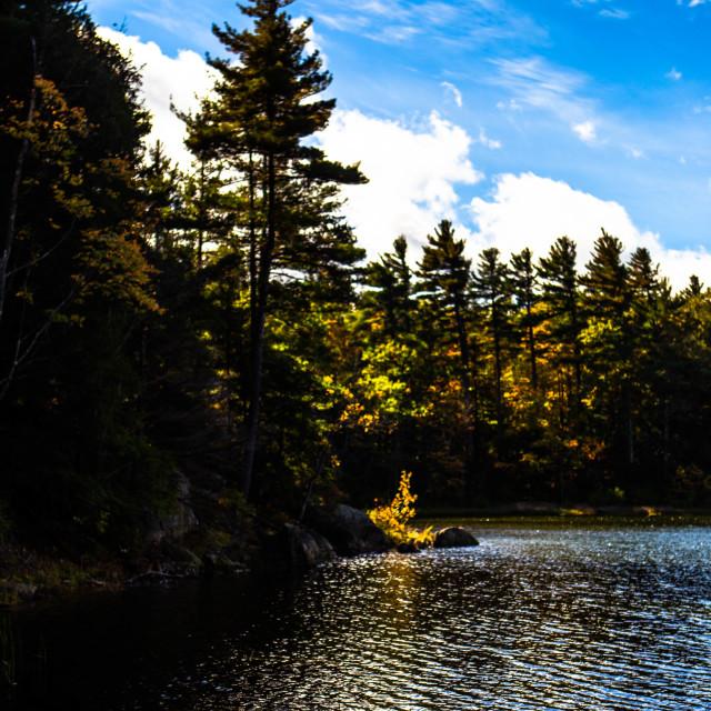 """""""Autumn Tree on Gilson Pond, NH, USA"""" stock image"""