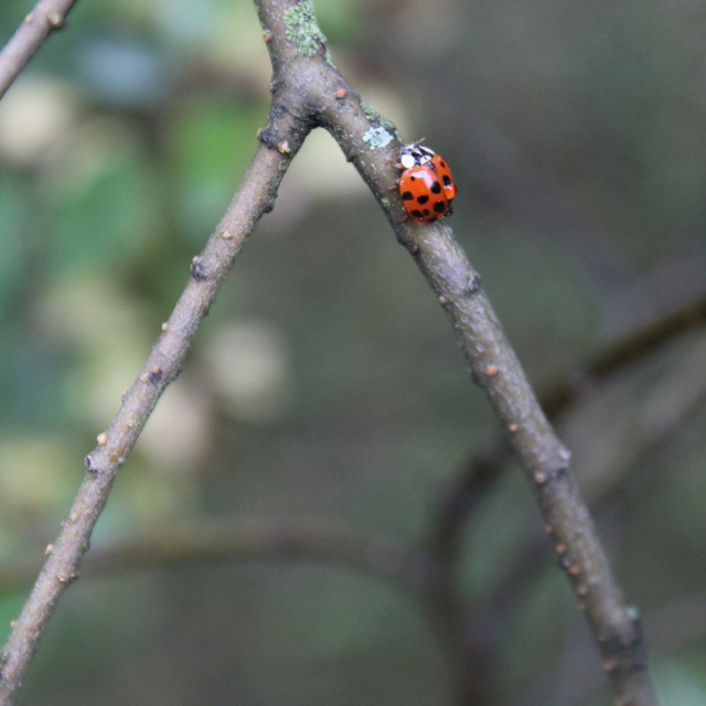 """lady bug"" stock image"
