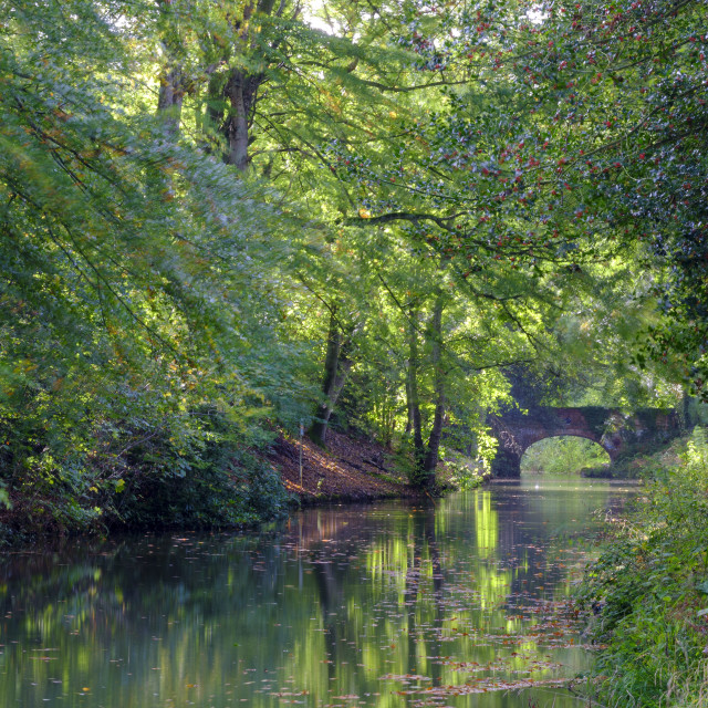 """Autumn sunlight on the Basingstoke Canal near Stacey's Bridge, H"" stock image"