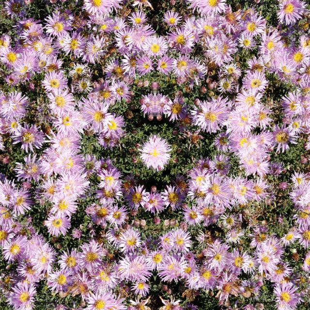 """Pink kaleidoscope flowers pattern"" stock image"