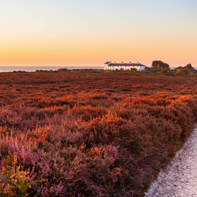 """Autumn colour on Dunwich Heath"" stock image"