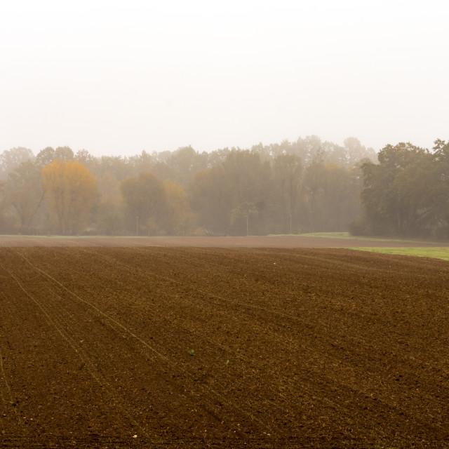 """Morning haze"" stock image"