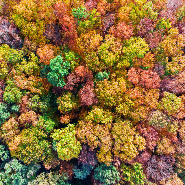 """Colorful autumn forest aerial view"" stock image"