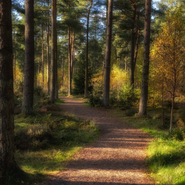 """""""Following the red squirrels path"""" stock image"""
