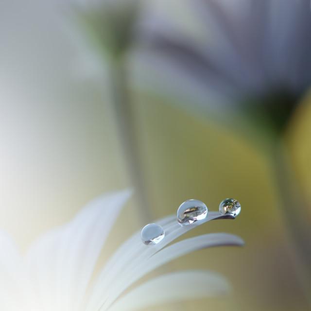 """Beautiful Green Nature Background.Ecology Energy of Plant."" stock image"
