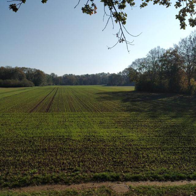 """Field on the start of winter"" stock image"