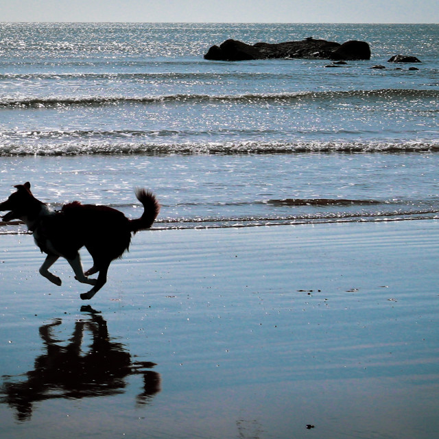 """""""Border Collie on The Beach"""" stock image"""