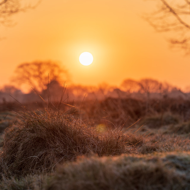 """""""A knob of grass highlighted by the rising sun in a park"""" stock image"""