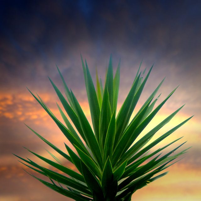"""Montage of plant against sunset sky"" stock image"