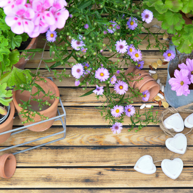 """""""pink flowers and flower pots on wooden background"""" stock image"""
