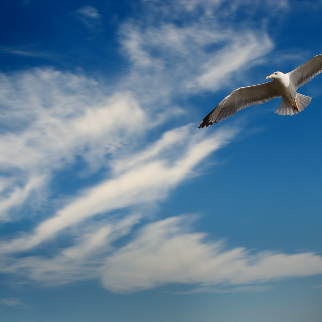 """Seagull against blue sky"" stock image"