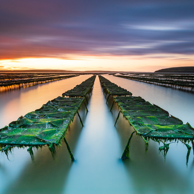 """Oyster Farm Sunrise"" stock image"
