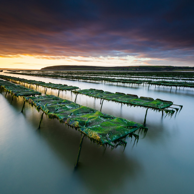 """Oyster Farm"" stock image"