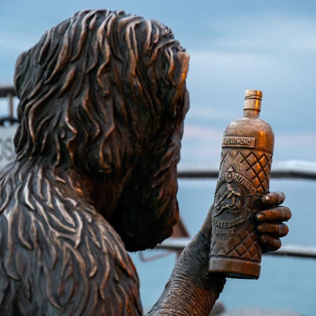 """Monkey looks at the bottle of anis vodka"" stock image"