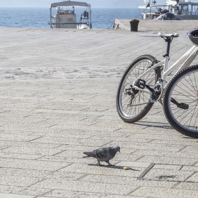 """Bicycle and pigeon, autumn break"" stock image"