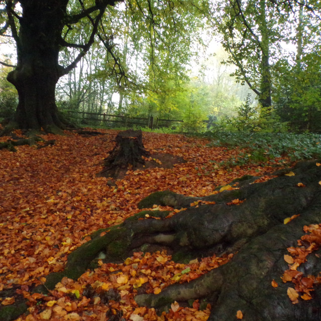 """worsley woods"" stock image"