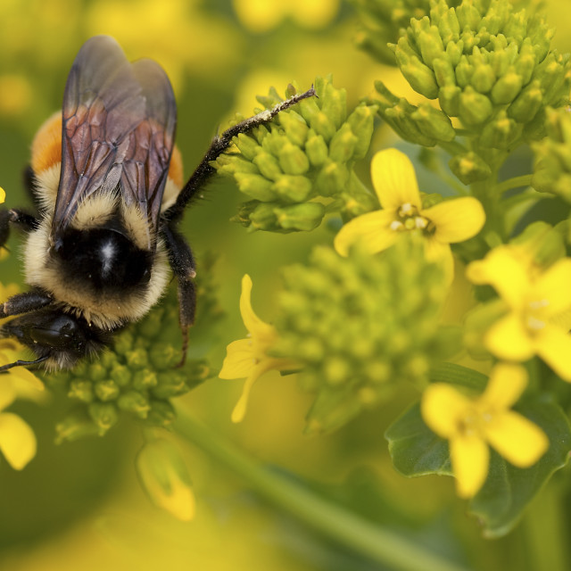 """""""Busy as a Bee"""" stock image"""