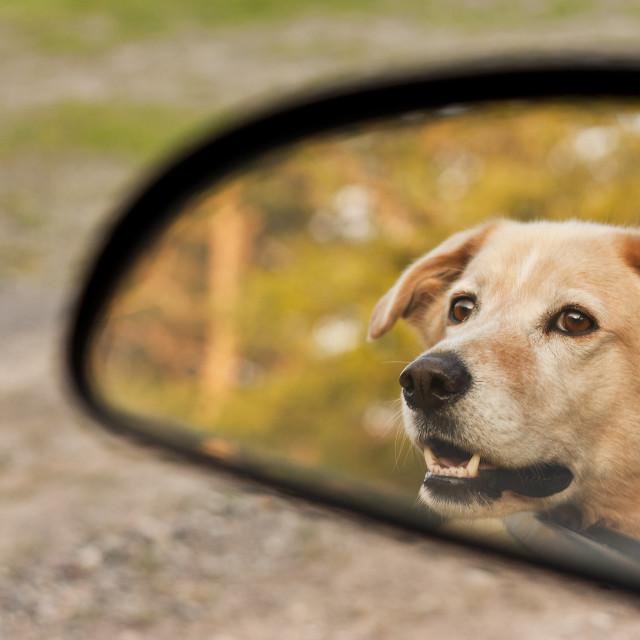 """Car Ride"" stock image"
