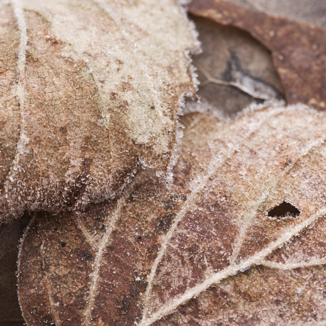 """""""Frosted Decay"""" stock image"""