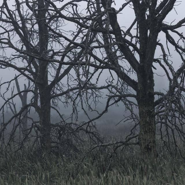 """Forest Skeletons"" stock image"