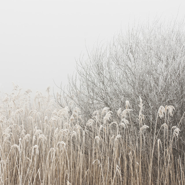 """""""Grass and Branches"""" stock image"""