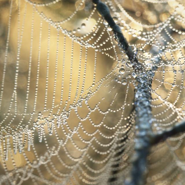 """Web of Dew"" stock image"