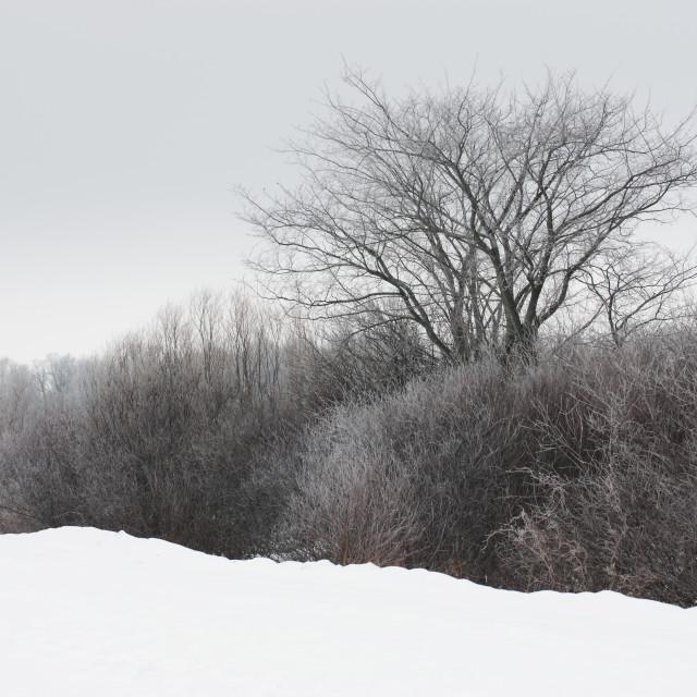 """A Tree Among the Brush"" stock image"