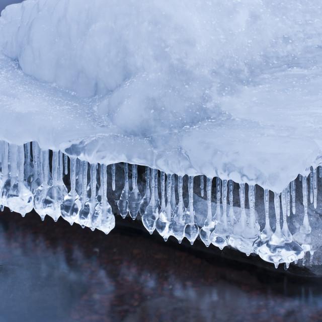 """Minnesota Jellyfish"" stock image"