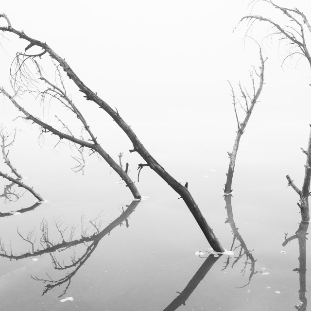 """Branches Reaching Through the Ice"" stock image"