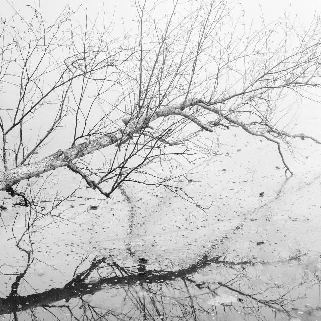 """Fallen Tree Over Frozen Lake"" stock image"