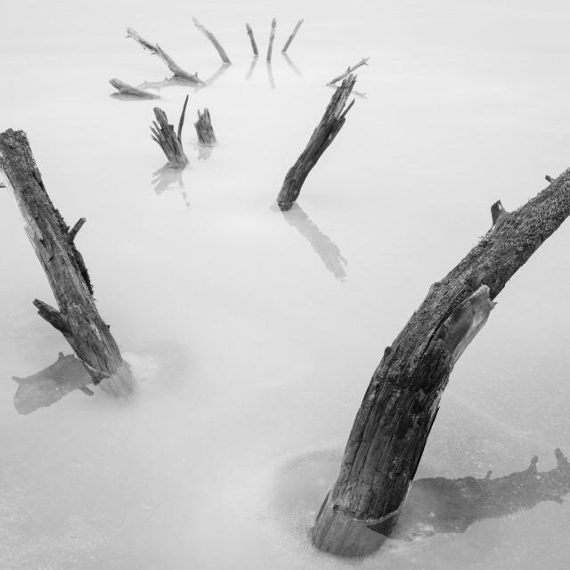 """""""Frozen Tree"""" stock image"""