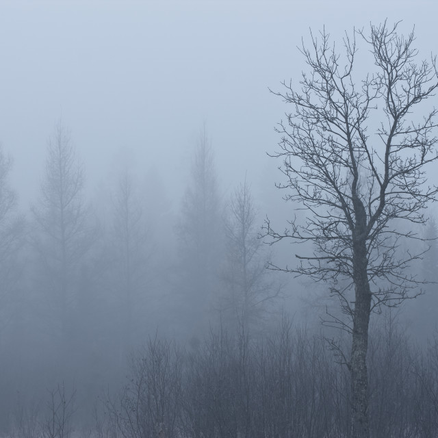 """Emerging Tree"" stock image"