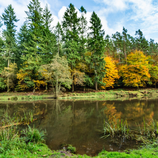 """""""Autumn at Soudley Ponds 10"""" stock image"""
